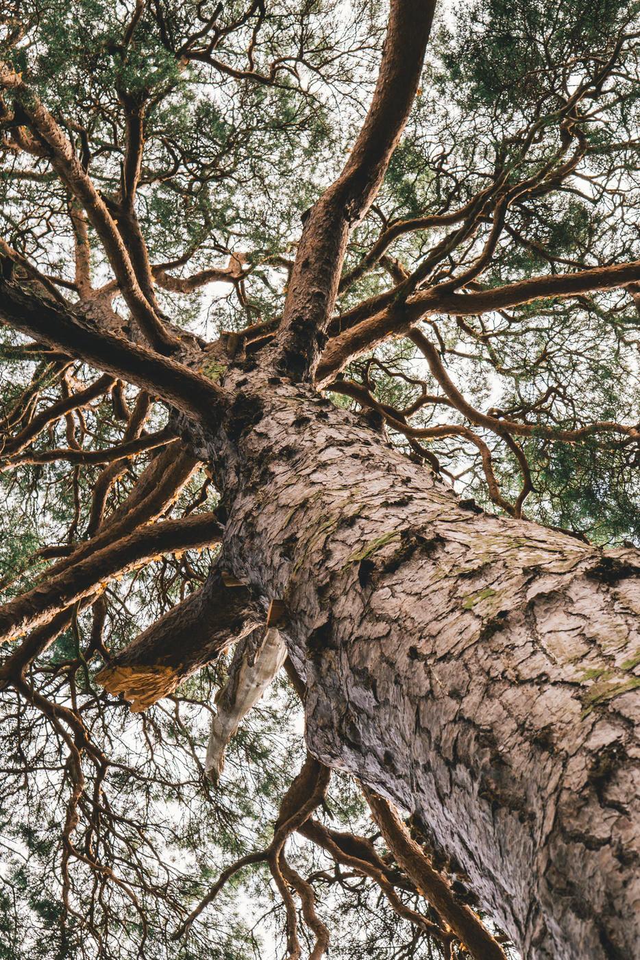 Bei jedem Kauf wird pro Karte ein Baum gepflanzt