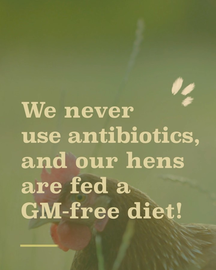 Absolutely no antibiotics are used on our farms. Food as it should be and food you can trust.