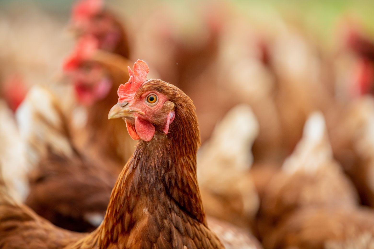 Our response to Bird flu