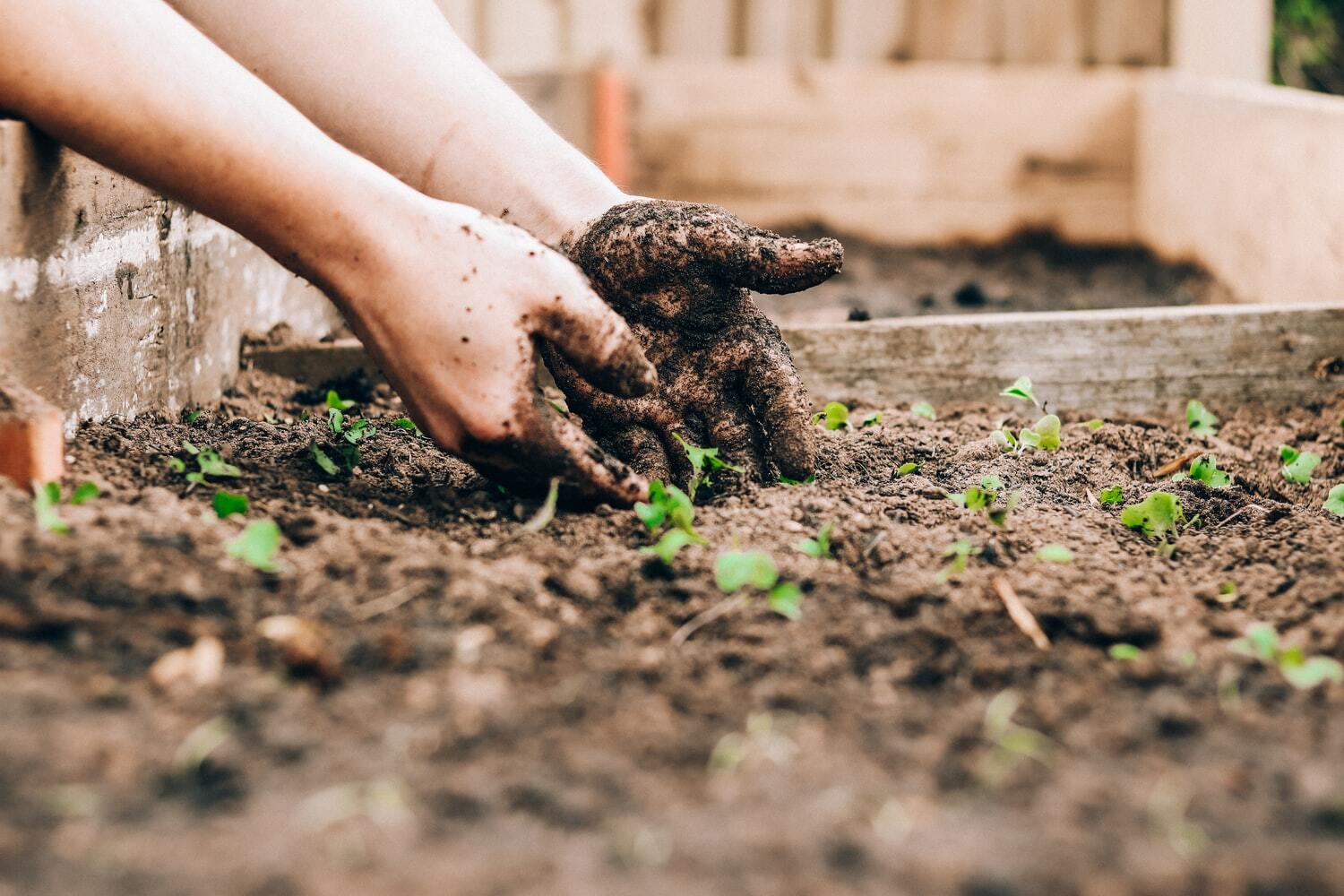 12 Essential Supplies For New Gardeners