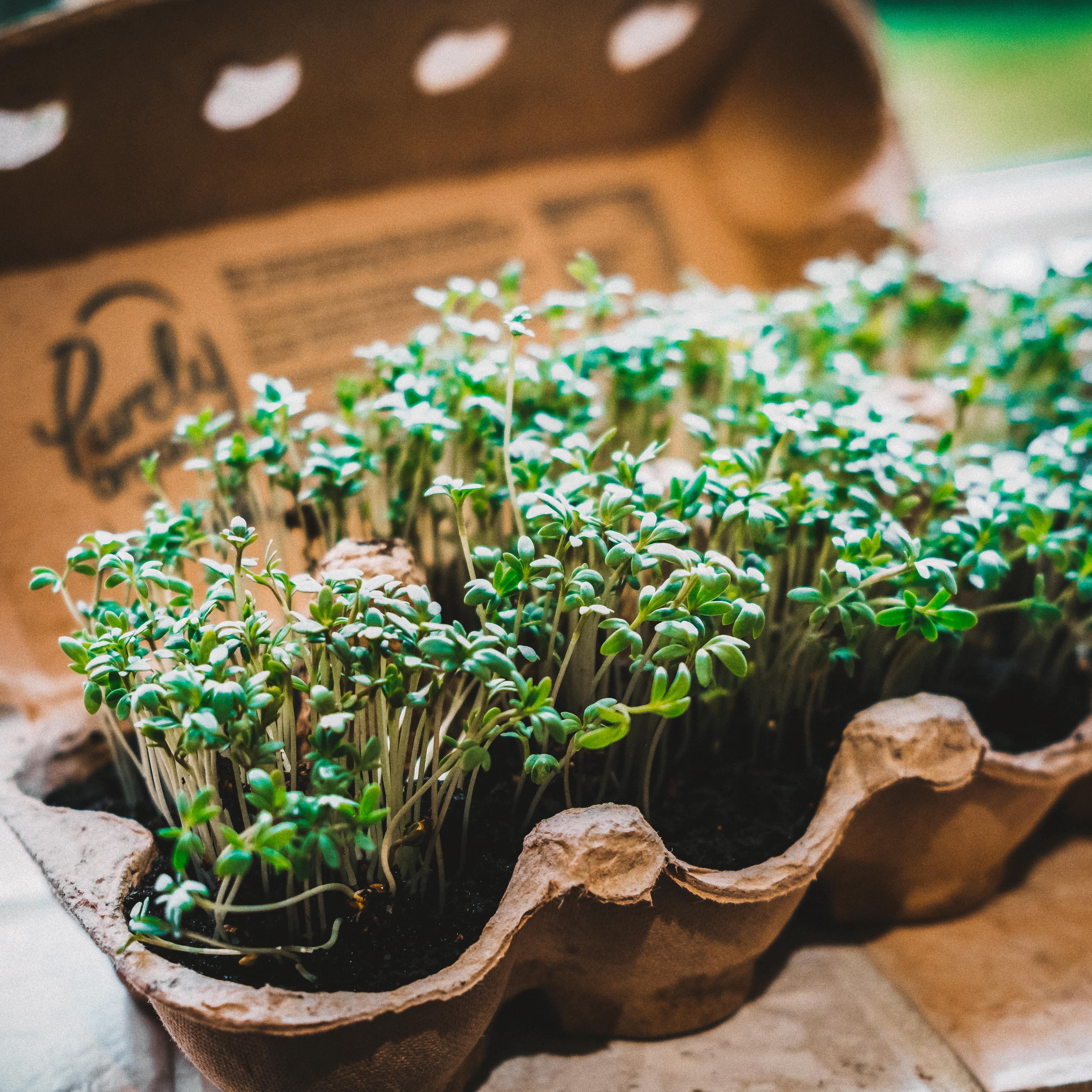 Your Indoor Herb Garden Is Pending