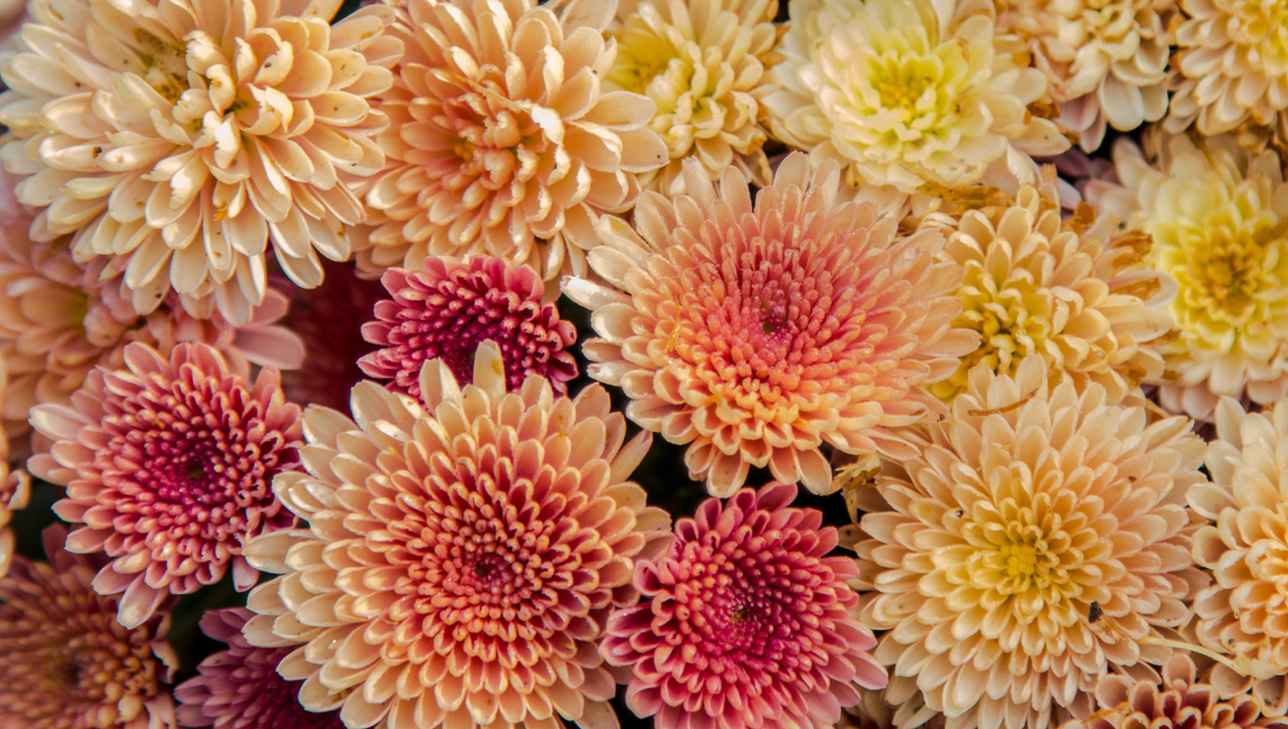 Mums the Word!