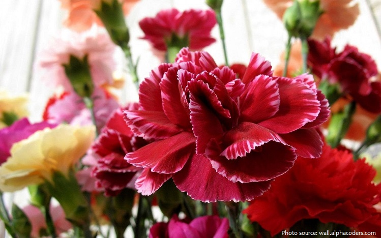 Carnation is not a 4 letter word.