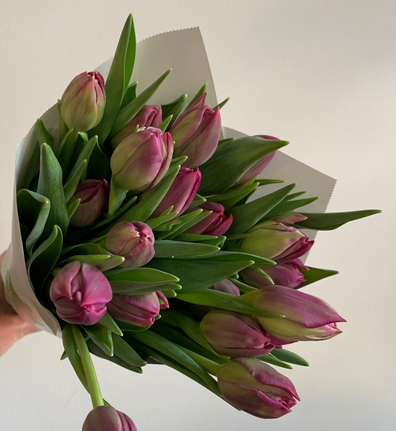 Cut Flower Care 101