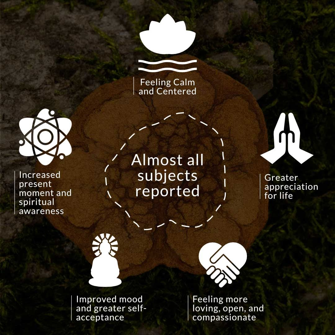 Ayahuasca benefits.Behold Retreats, a wellness company that specialises in the therapeutic use of plant-based medicine to aid in personal and spiritual growth. Plant medicine luxury retreat, ayahuasca, psychedelics, psilocybin, 5-meo DMT. Science, infographics, research