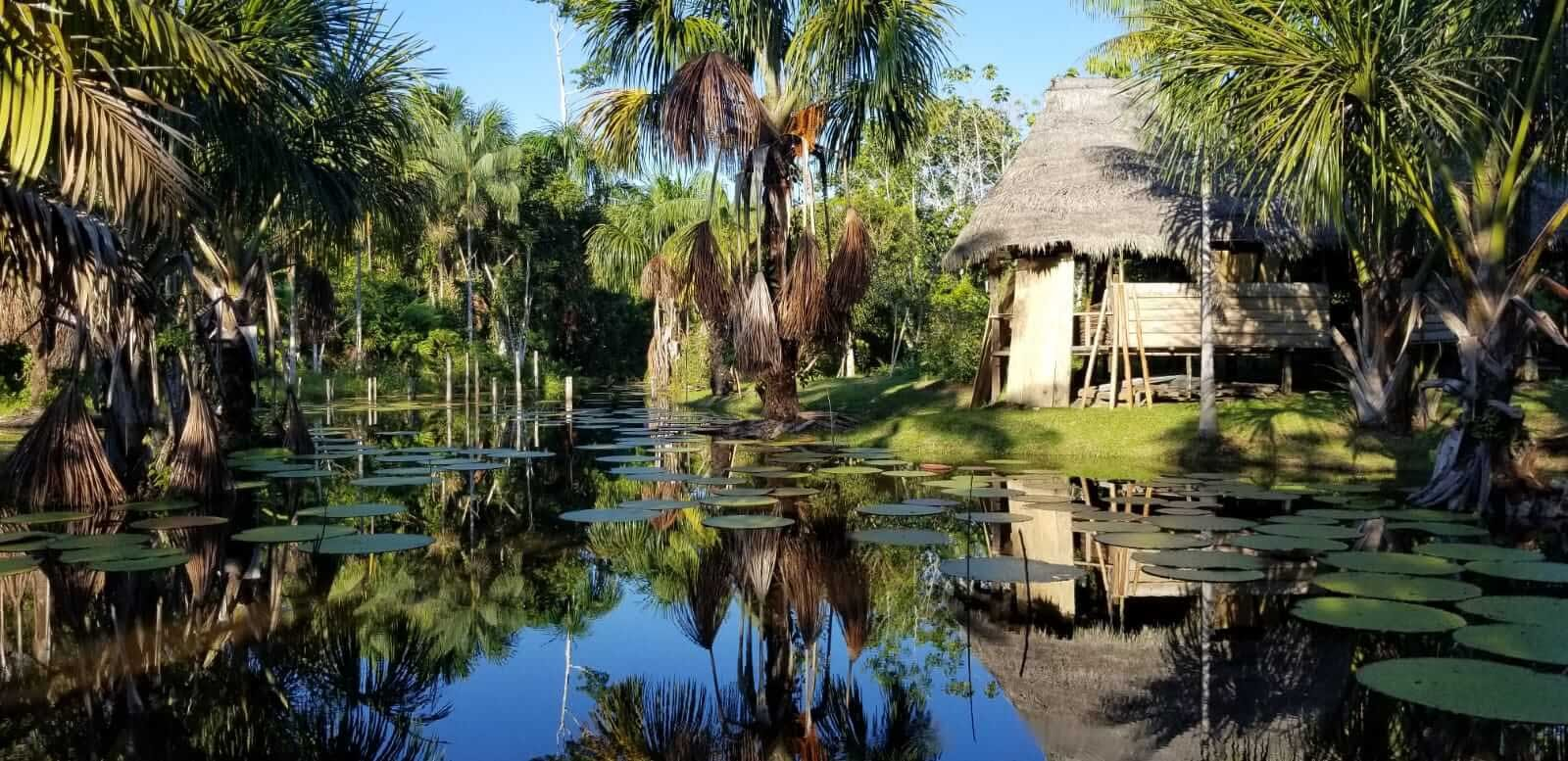 Behold Retreats, a wellness company that specialises in the therapeutic use of plant-based medicine to aid in personal and spiritual growth. Plant medicine, ayahuasca, psychedelics, psilocybin, 5-meo DMT. USA. Peru. Gaia Tree Center Ayahuasca Retreat