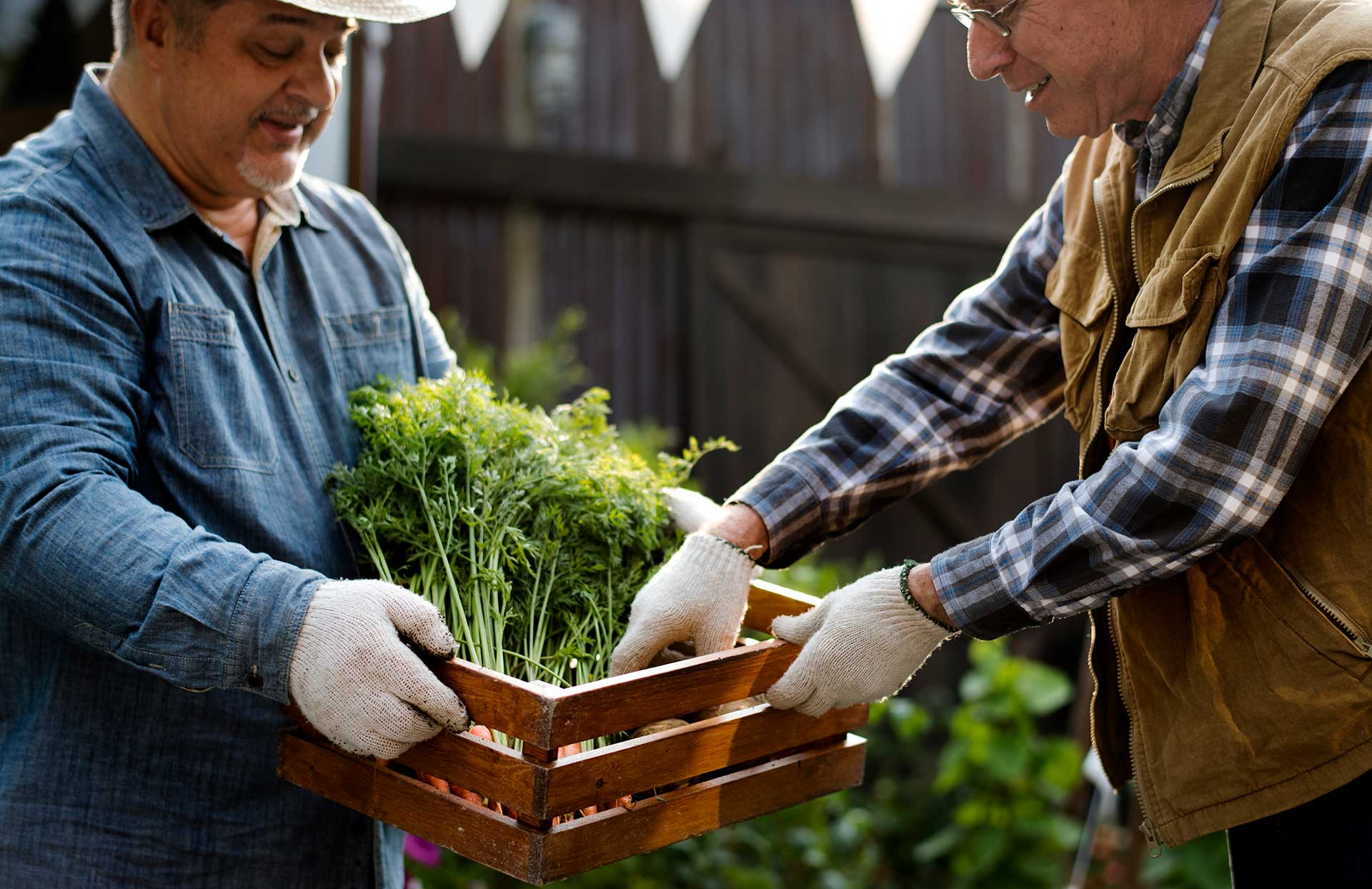 Two men filling a basket with fresh herbs from a garden.