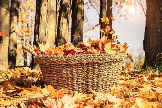 basket containing dry leaves