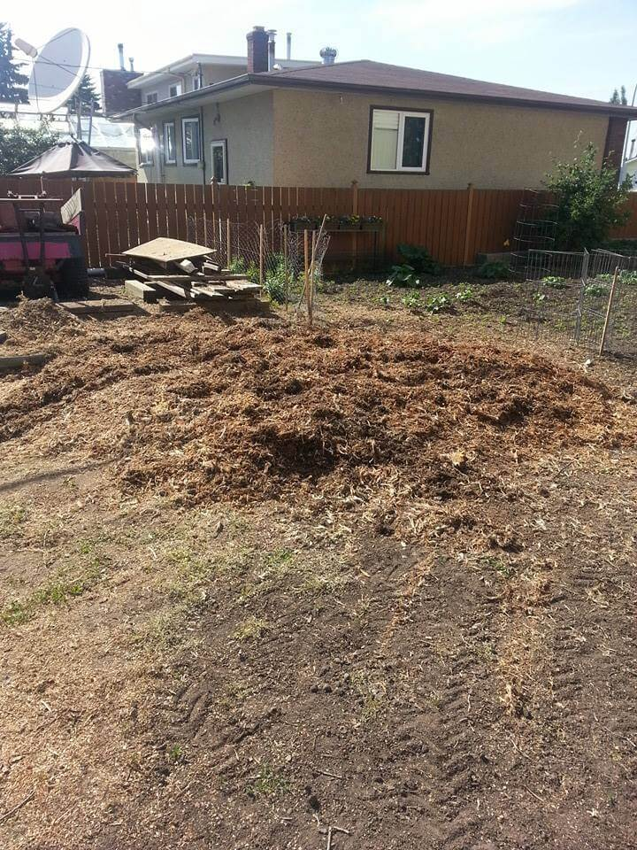 after stump removal service in Edmonton, AB