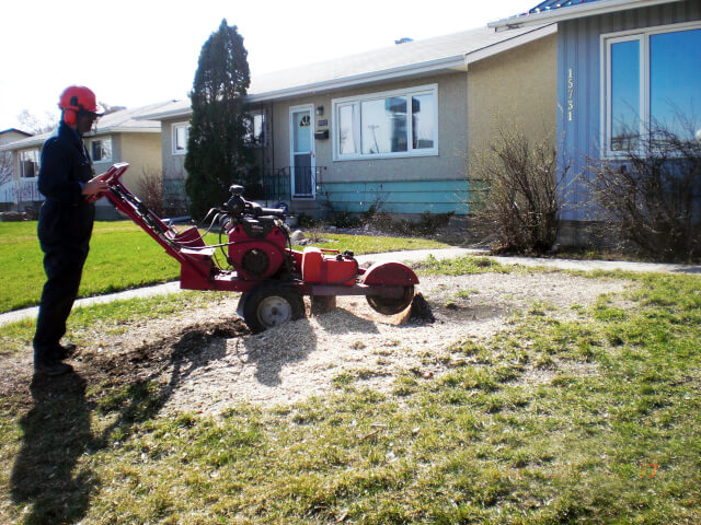 residential tree stump removal in Edmonton, AB