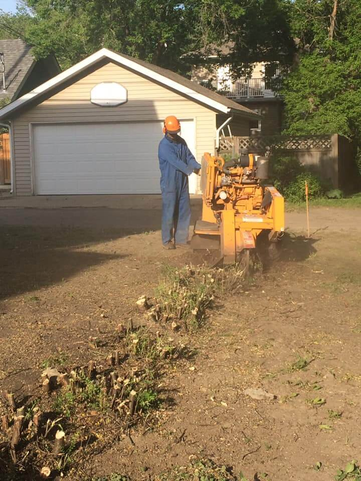 hedge removal service in Edmonton, AB