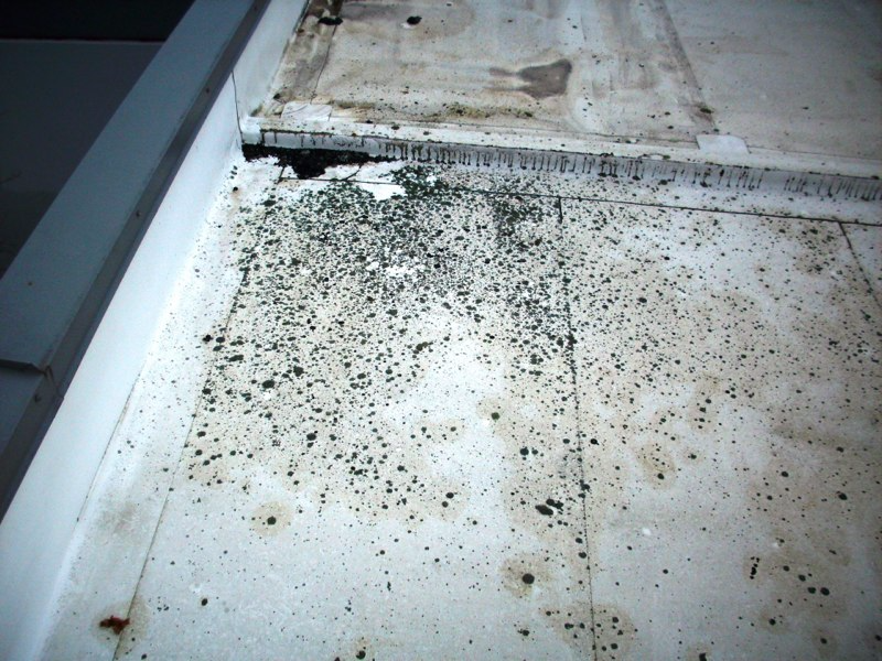 Can I Restore My TPO Roof? | Your Answer To These 6 Questions Will Determine If Your Roof Is A Good Candidate For A Liquid Applied Restoration