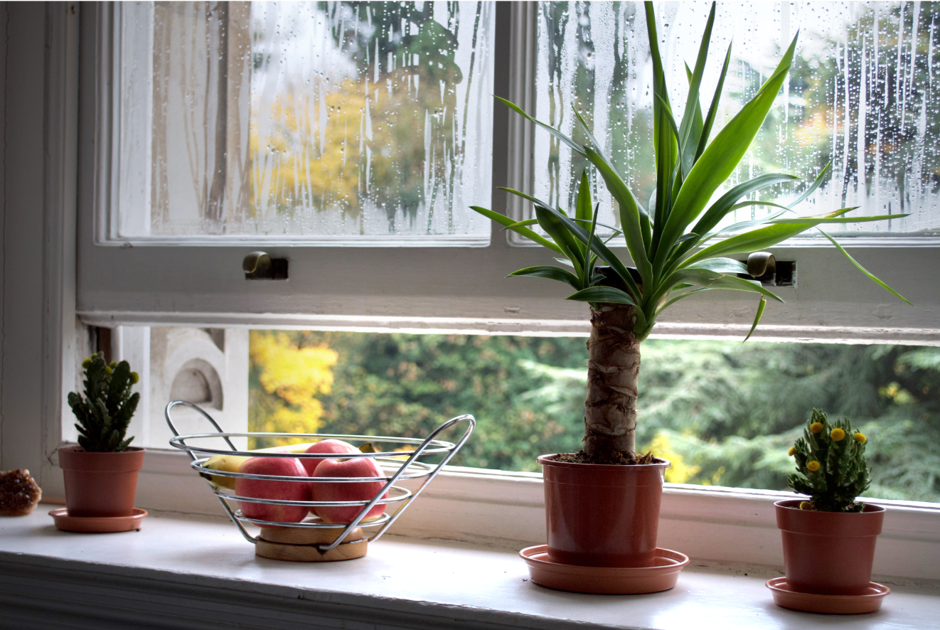 Window half open with a spikey plant in front of it