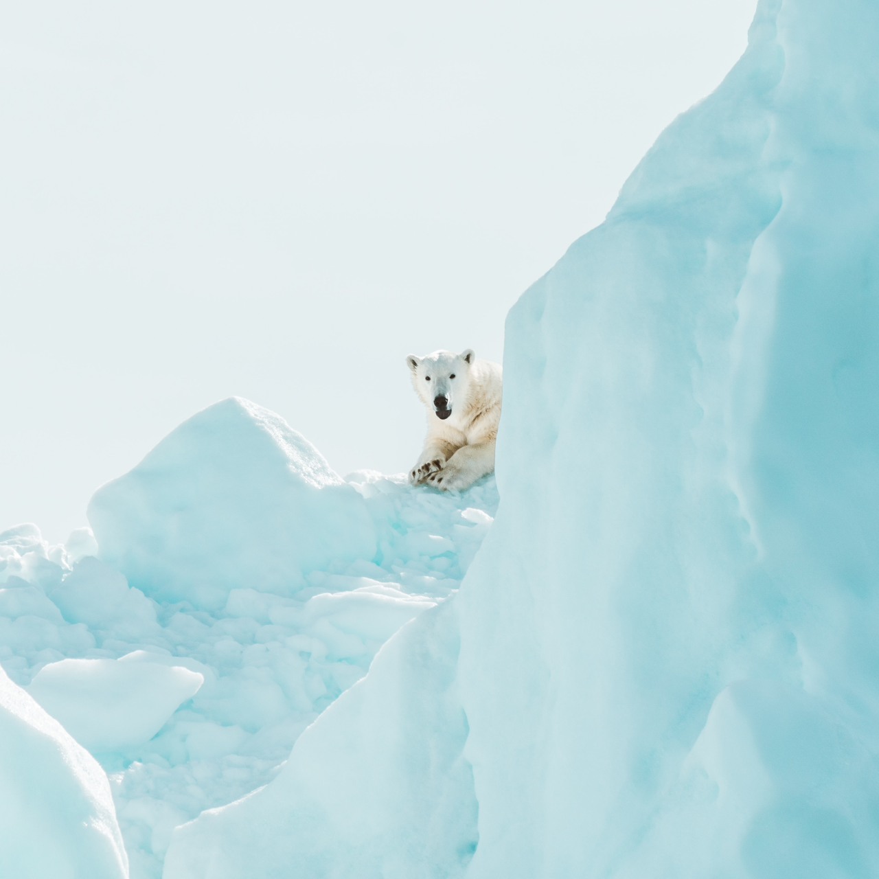 These 6 Climate Change Beliefs Are Incredibly Popular—But Wrong