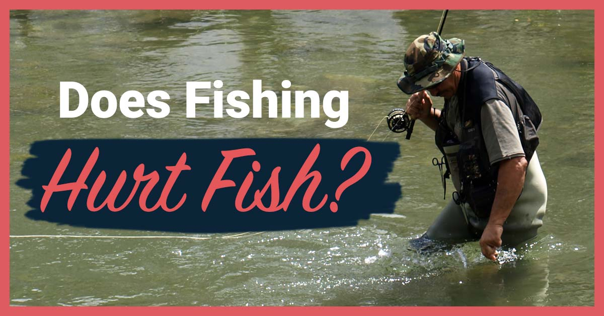 Does Fishing Hurt Fish? | Today I'm Outside