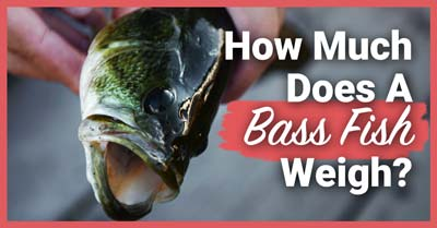 How Much Does A Bass Weigh | Today I'm Outside