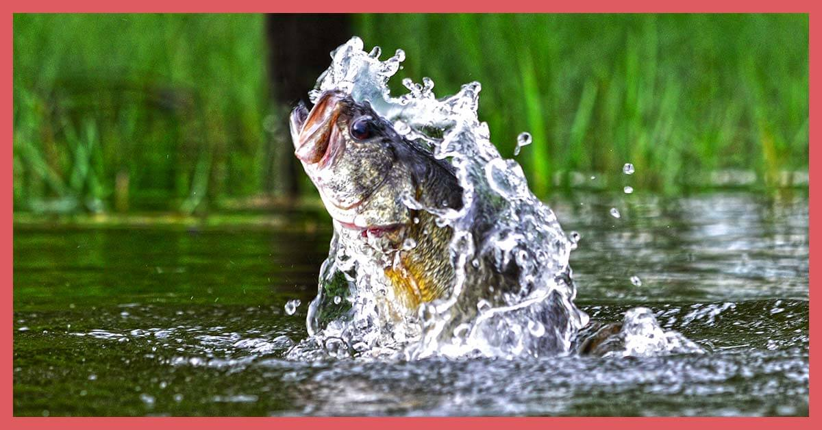 How To Topwater Fish | Today I'm Outside
