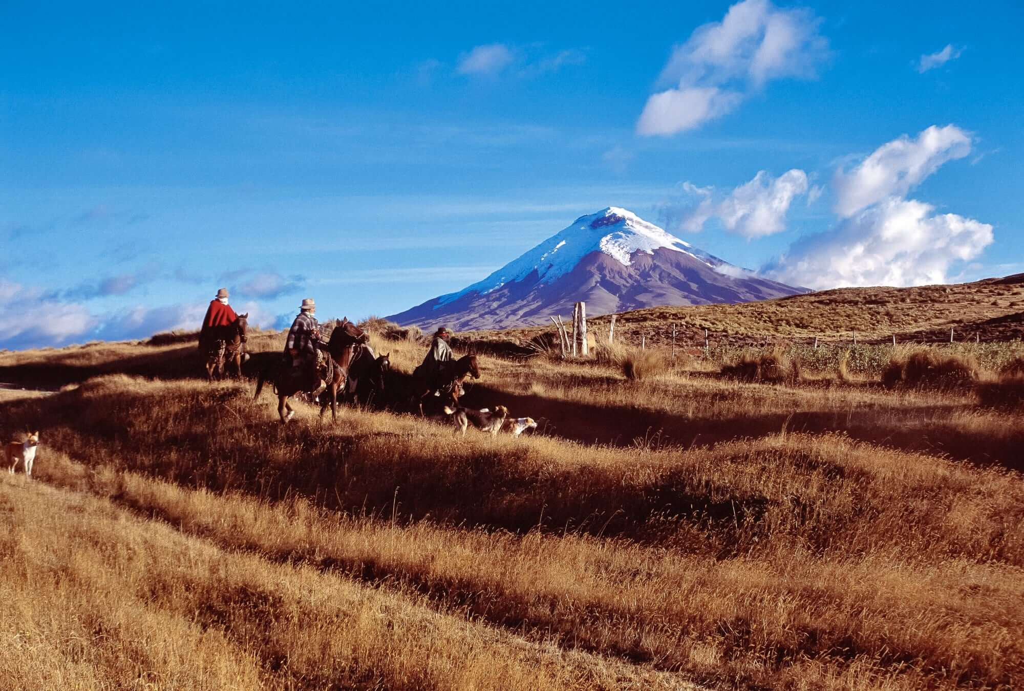 Cotopaxi with Chagras