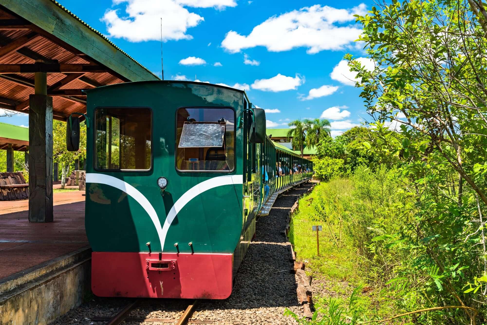 Jungel Train Iguazu