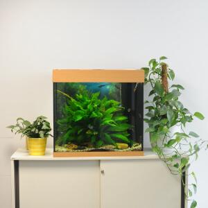 Aquarium in den Räumen des Berliner Wohnforum