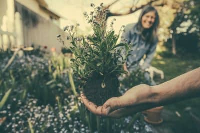 Hand holding flowers being repotted