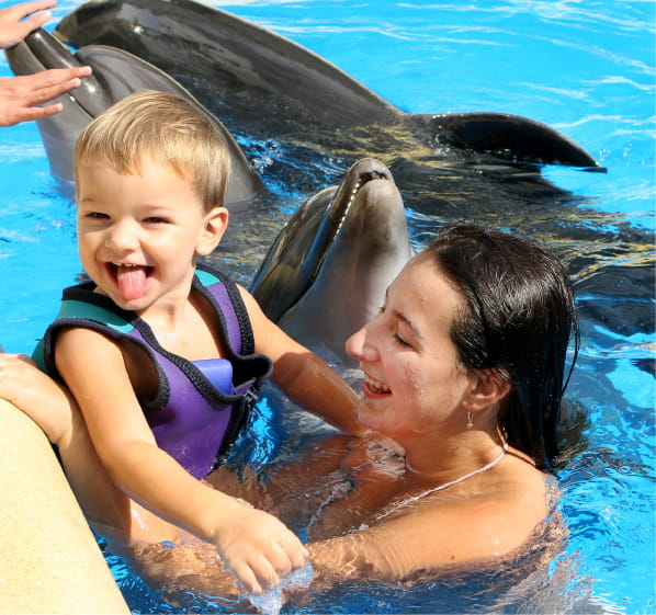 family playing with dolphins