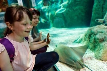Kids looking at a stingray through the glass