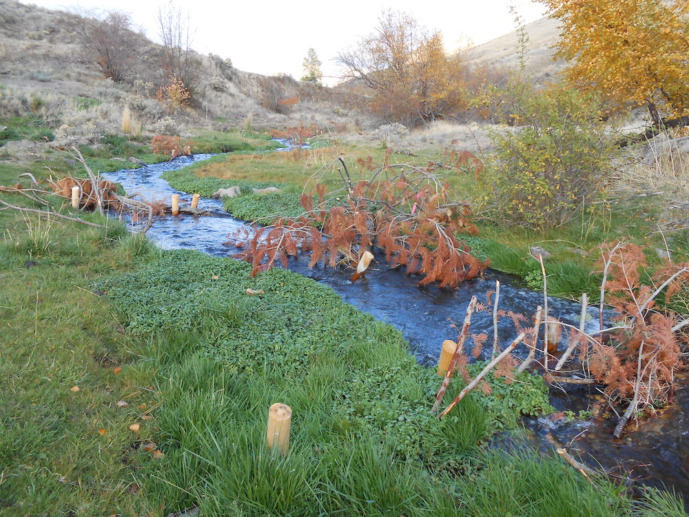 Post-assisted log structures on Alpowa Creek