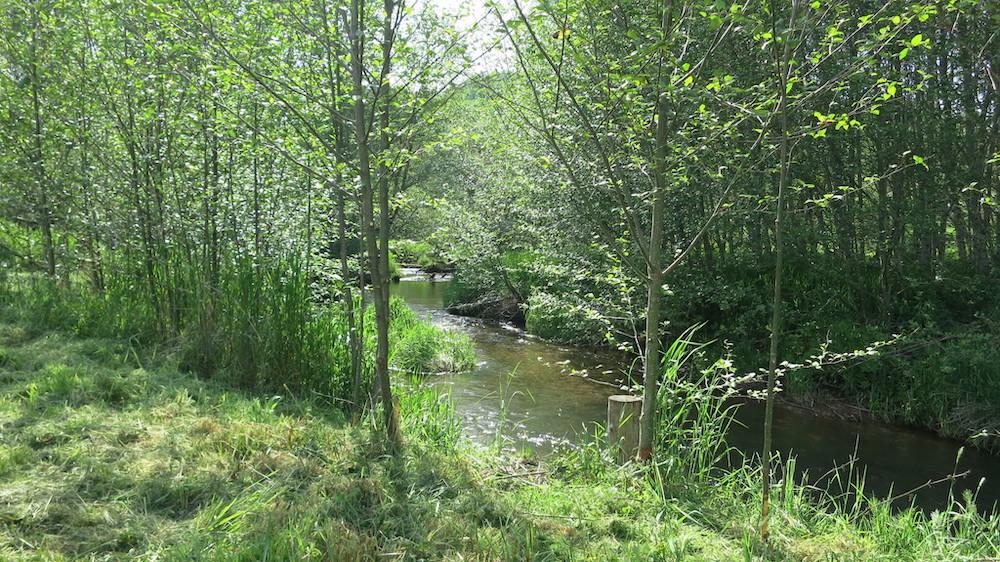 Streamside planting on Crippen Creek