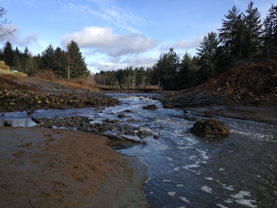 Tidegate removal, tidal restoration, Schopchiden Creek
