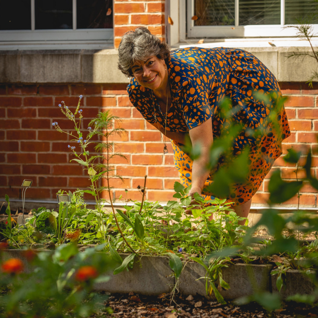 Woman plants tomatoes at her local Victory Garden in New Britain Connecticut in partnership with New Britain Roots