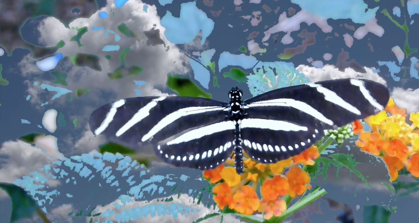 Paula Pinho Martins Nacif, Butterflies, breathless (video still), 2020. Single channel video. 00:13:38.