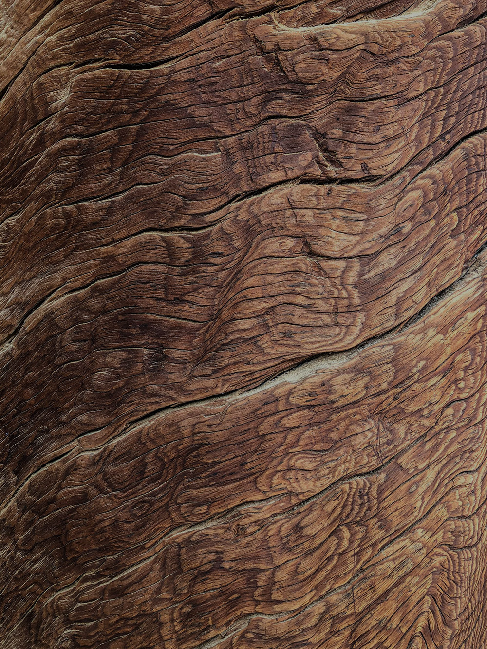 Image of rich brown bark close up