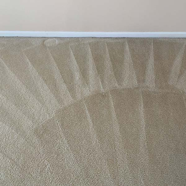 Carpet cleaning in Pingree Grove