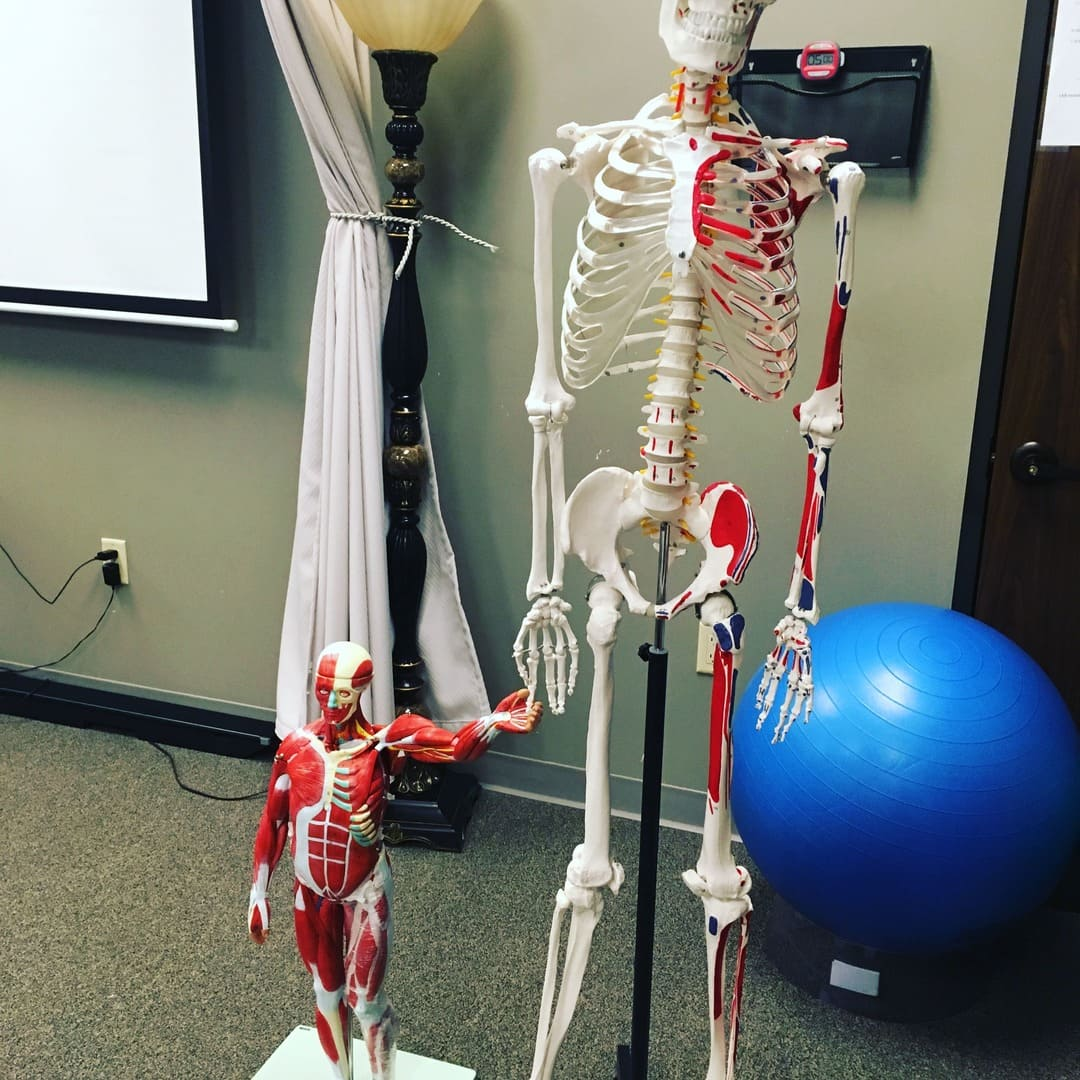 Skeleton Massage Therapy School in The Woodlands