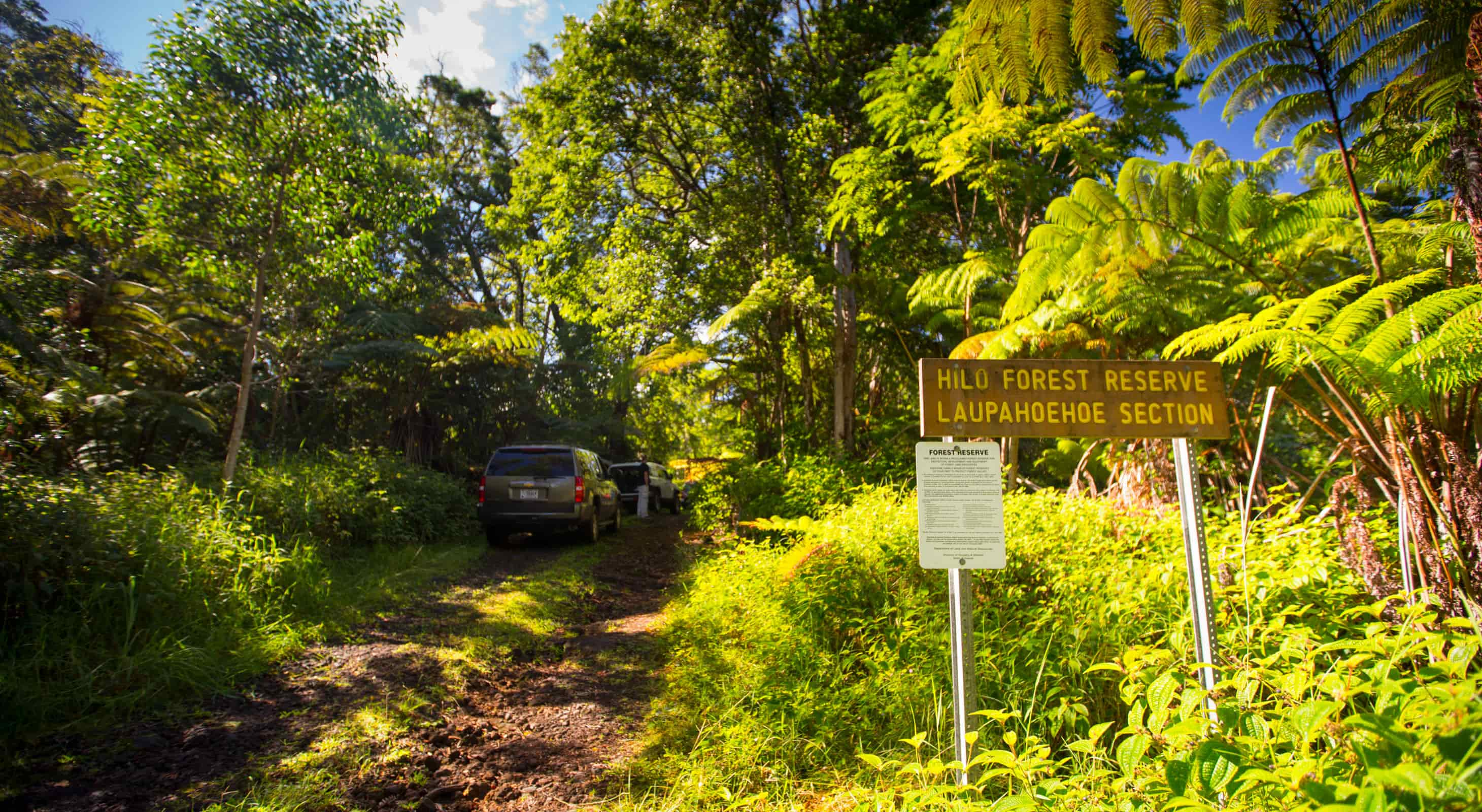 Laupahoehoe Forest Reserve