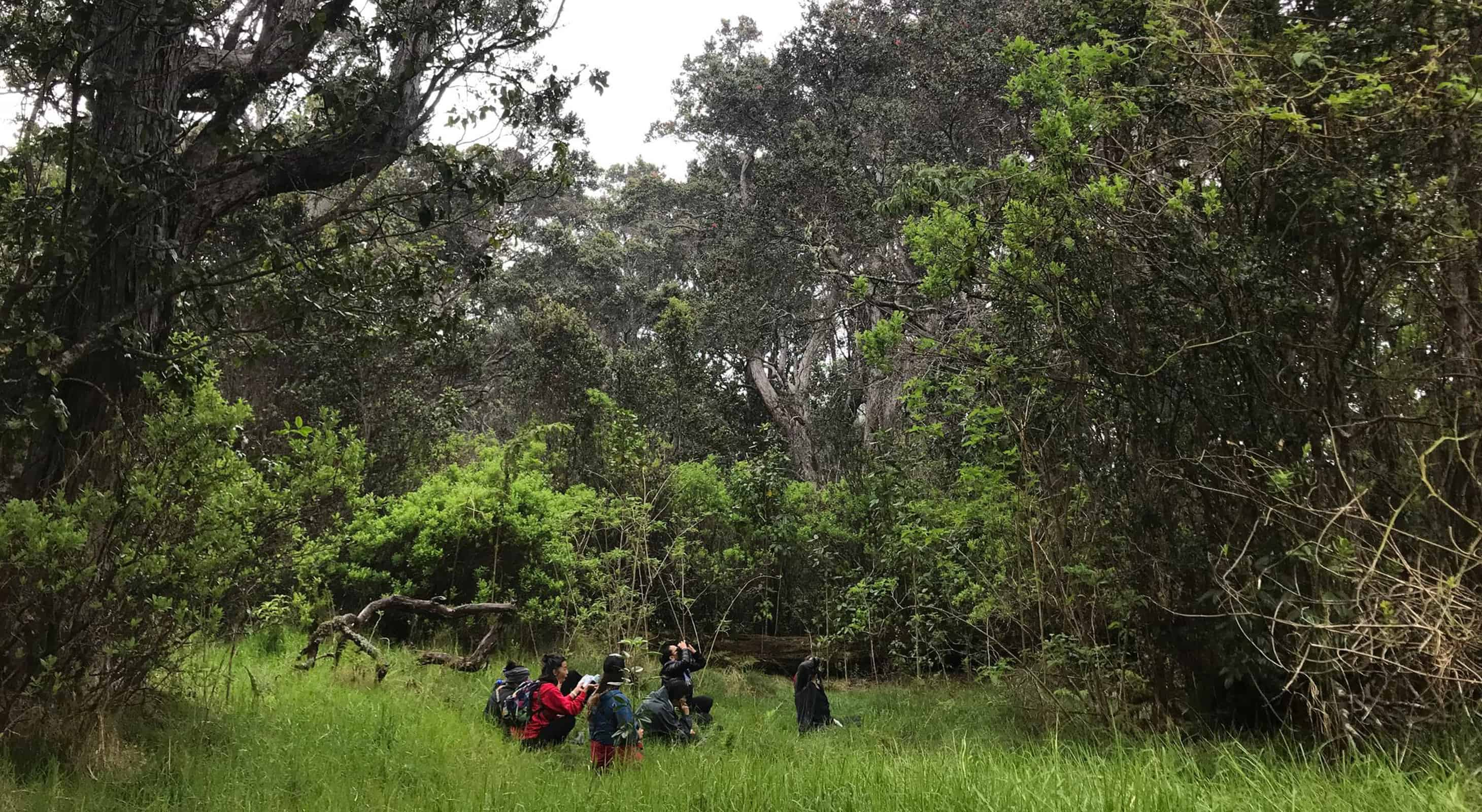 Group of teachers looking at birds in the Hakalau Forest
