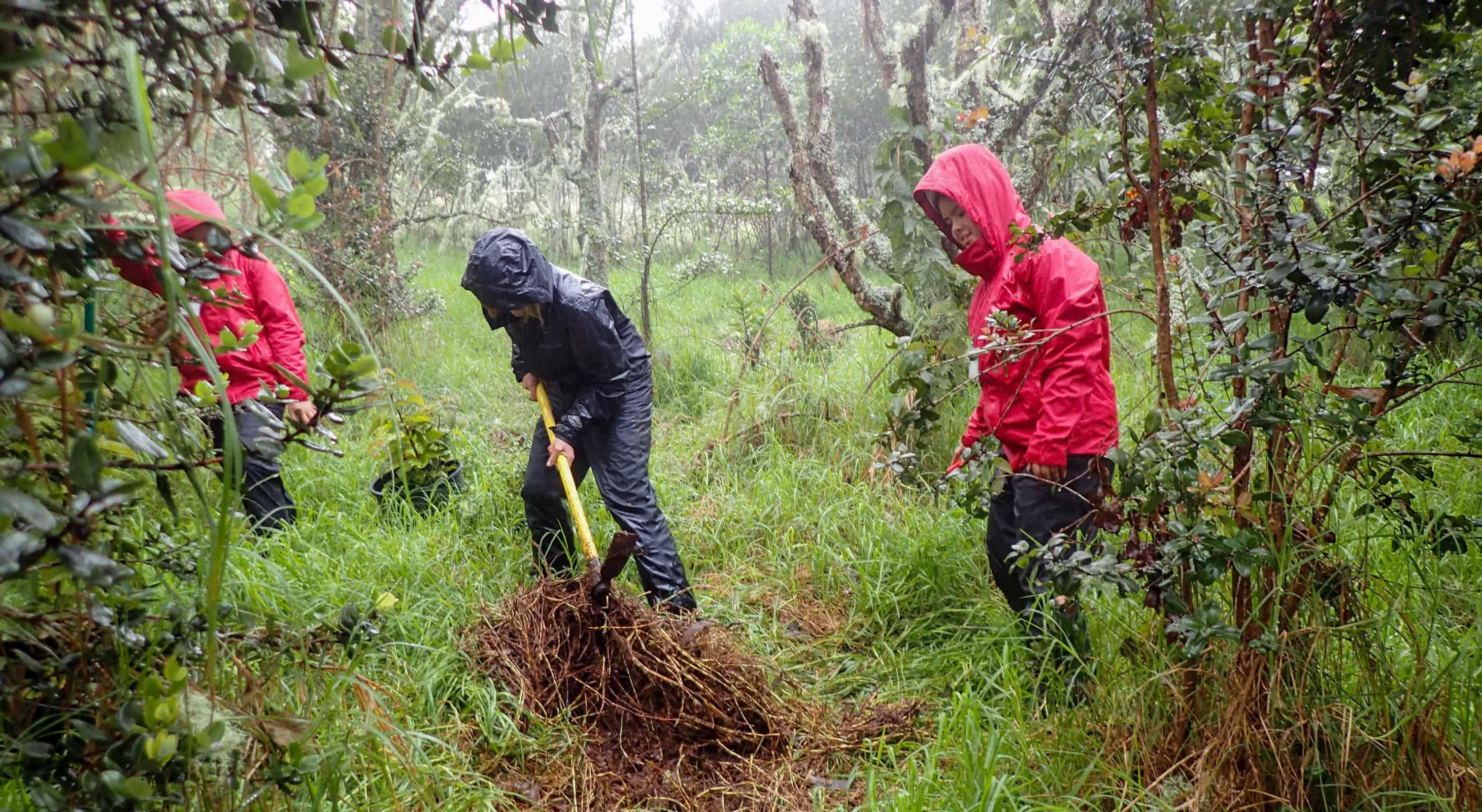 Students plant trees in Hakalau