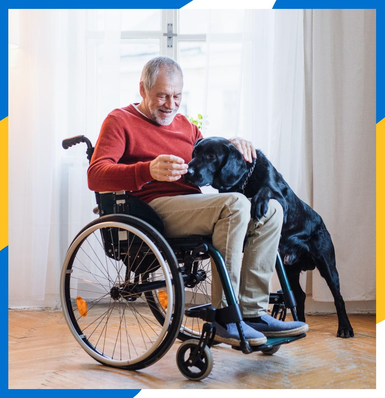 A man in a wheel chair petting his senior black Labrador