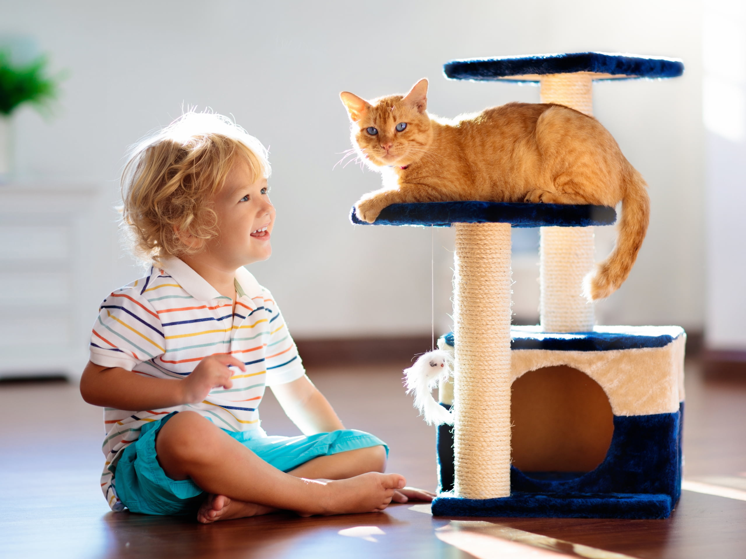Little boy sitting on the floor next to a cat laying on a cat tree.