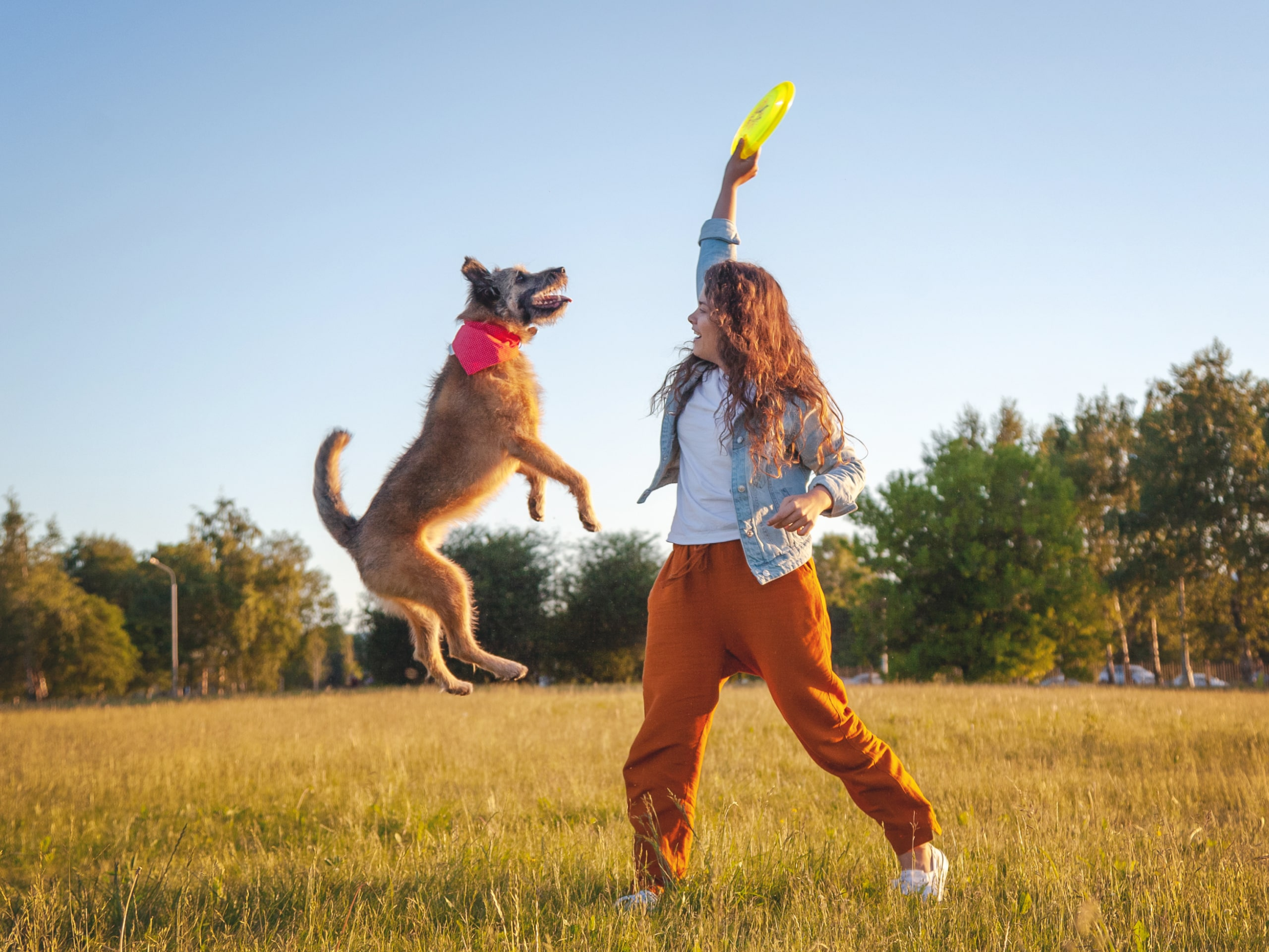 Dog jumping a frisbee that their owner is holding up in the air