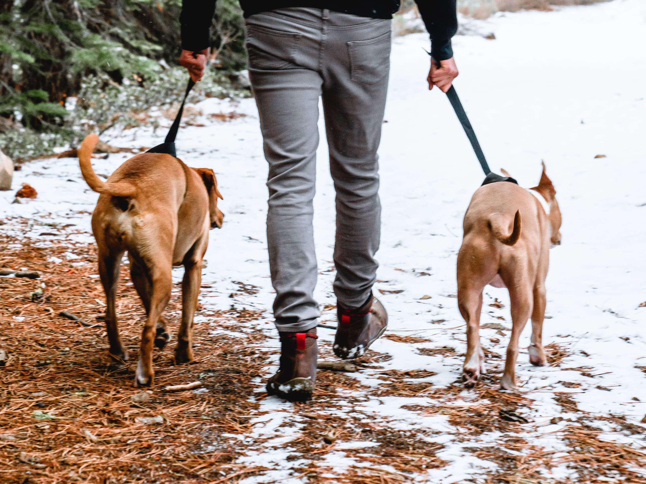 Two dogs walking outdoors during the winter