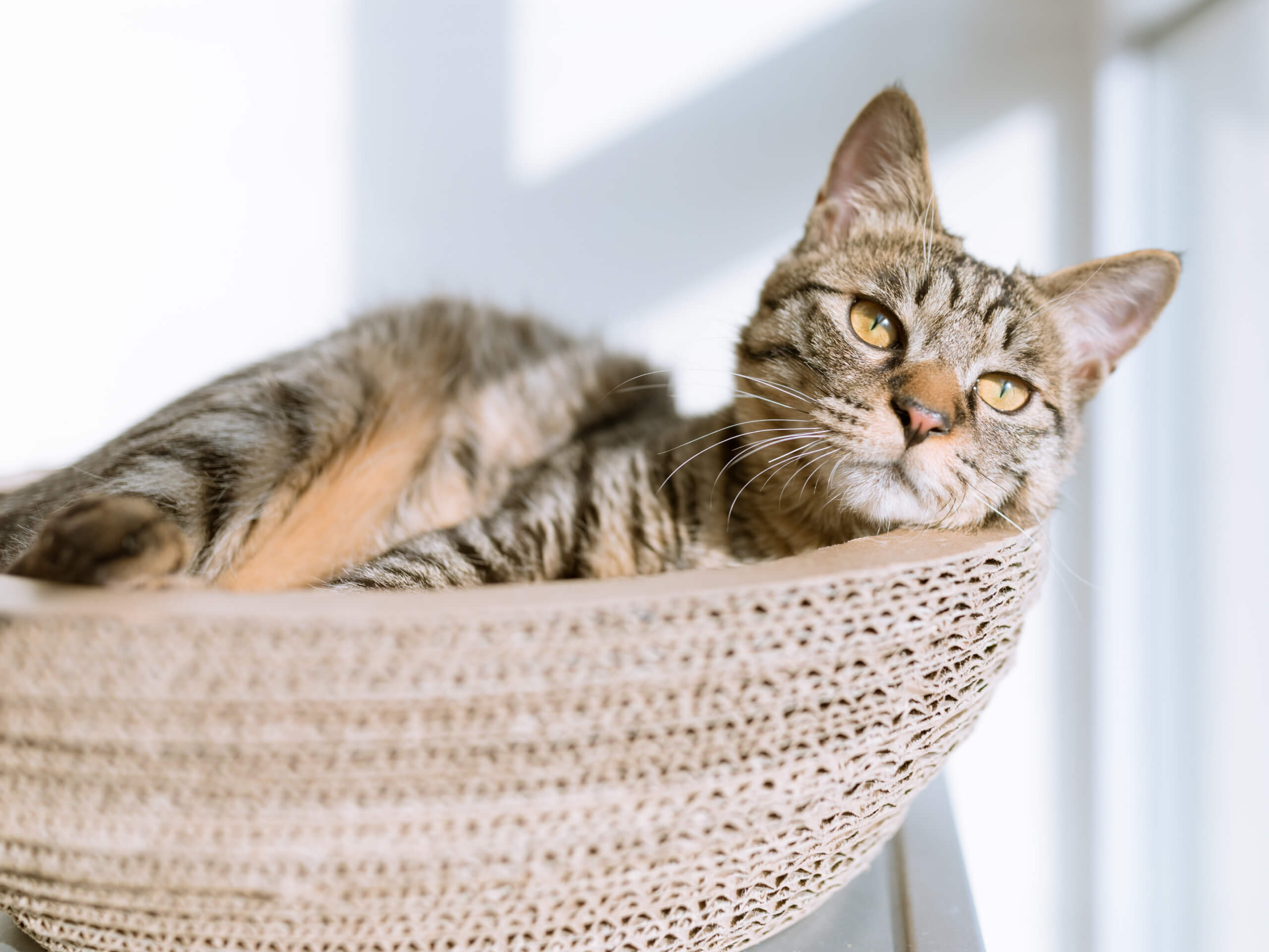 Cat relaxing in a basket in the sunshine