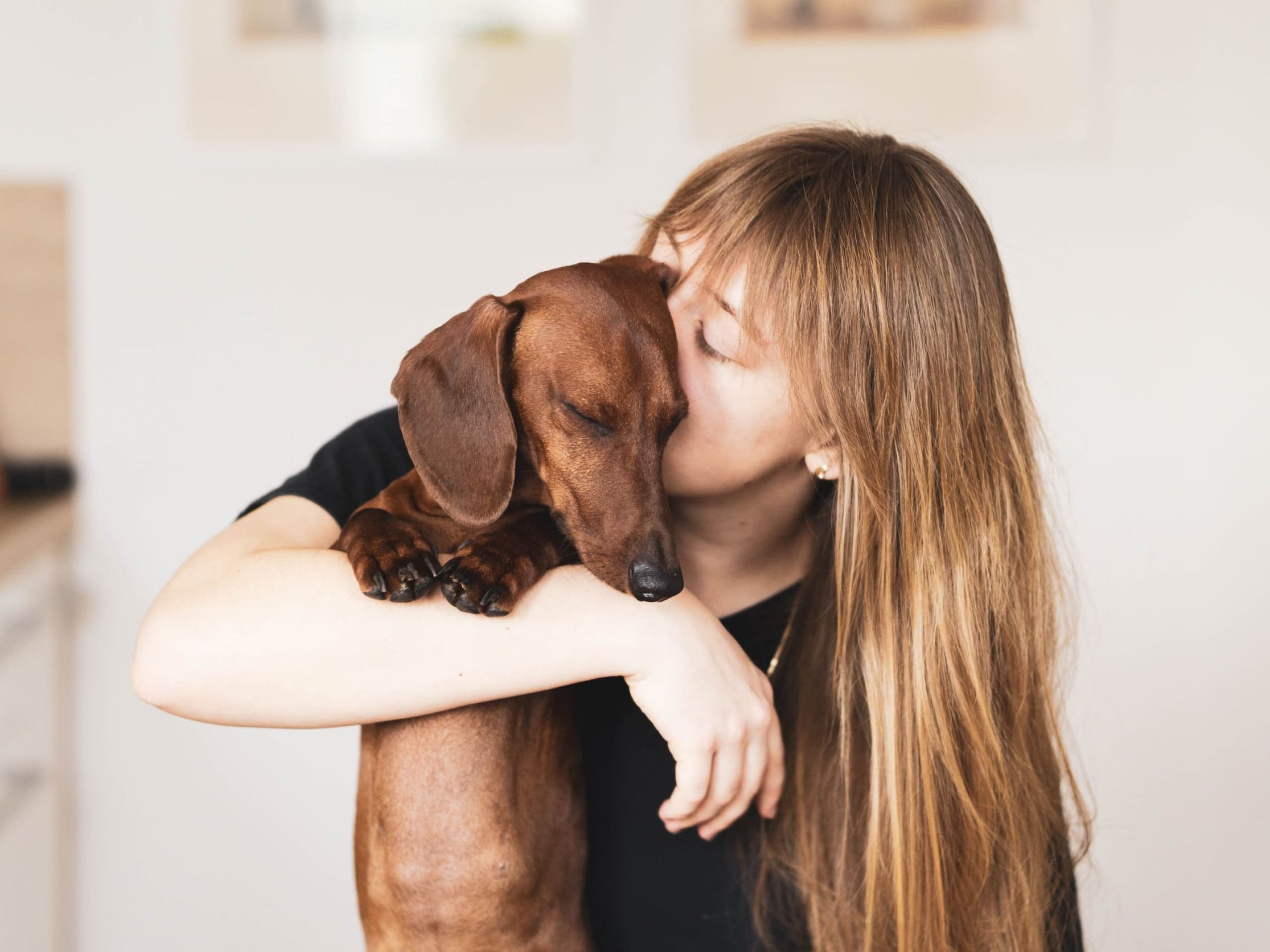 Someone loving and hugging a small, happy dog.