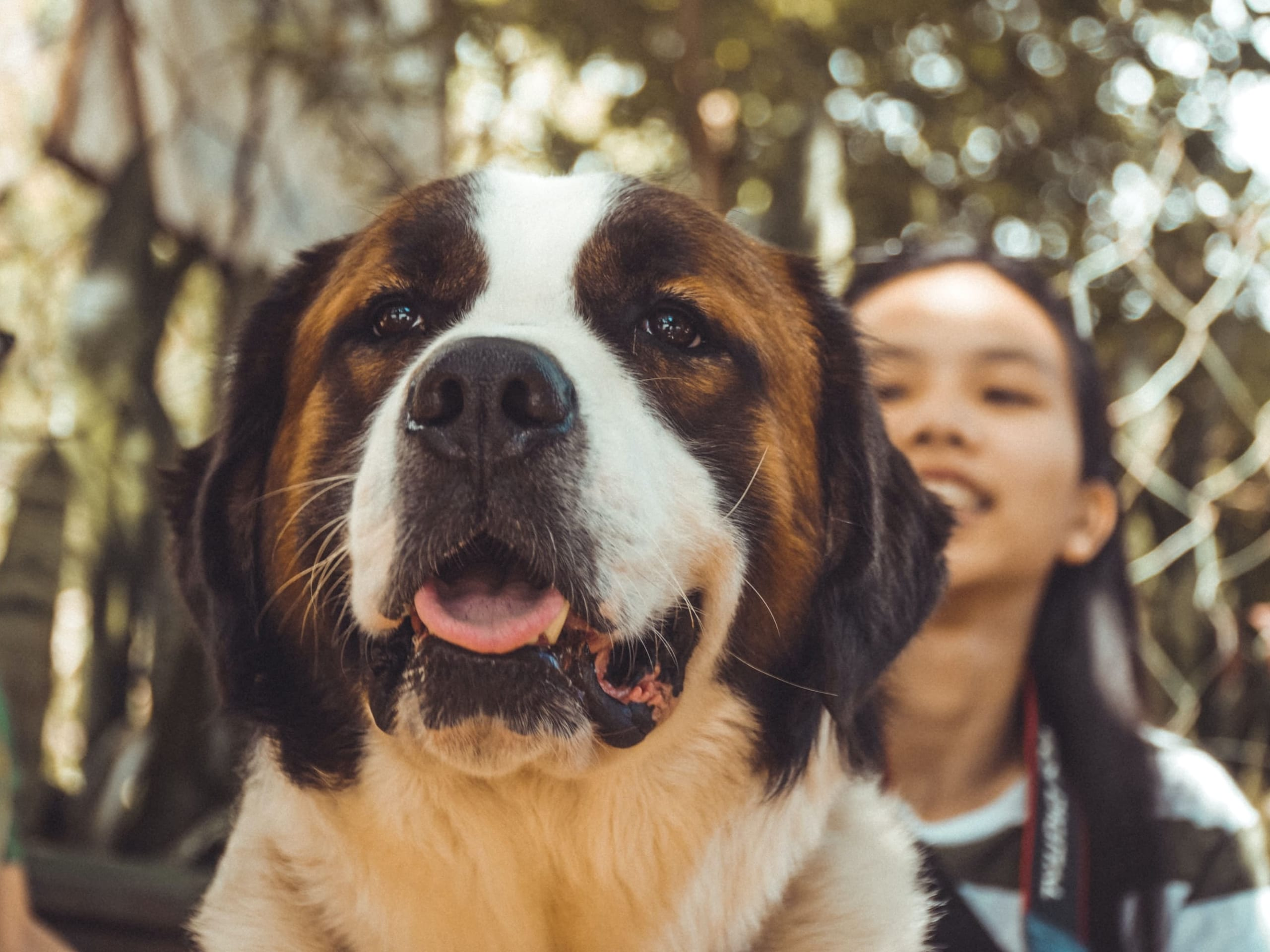 A close-up of a large dog smiling with smiling human friends behind.