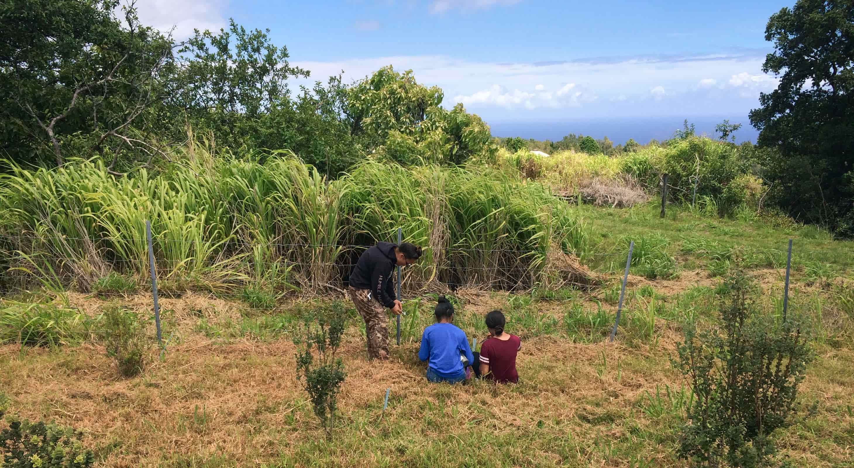 Hawaii Island students learn to plant trees