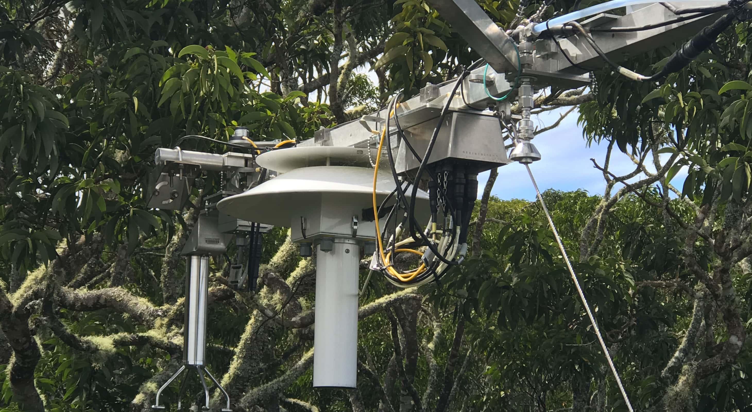 Observation tower at puʻumakaʻala in the canopy of Koa