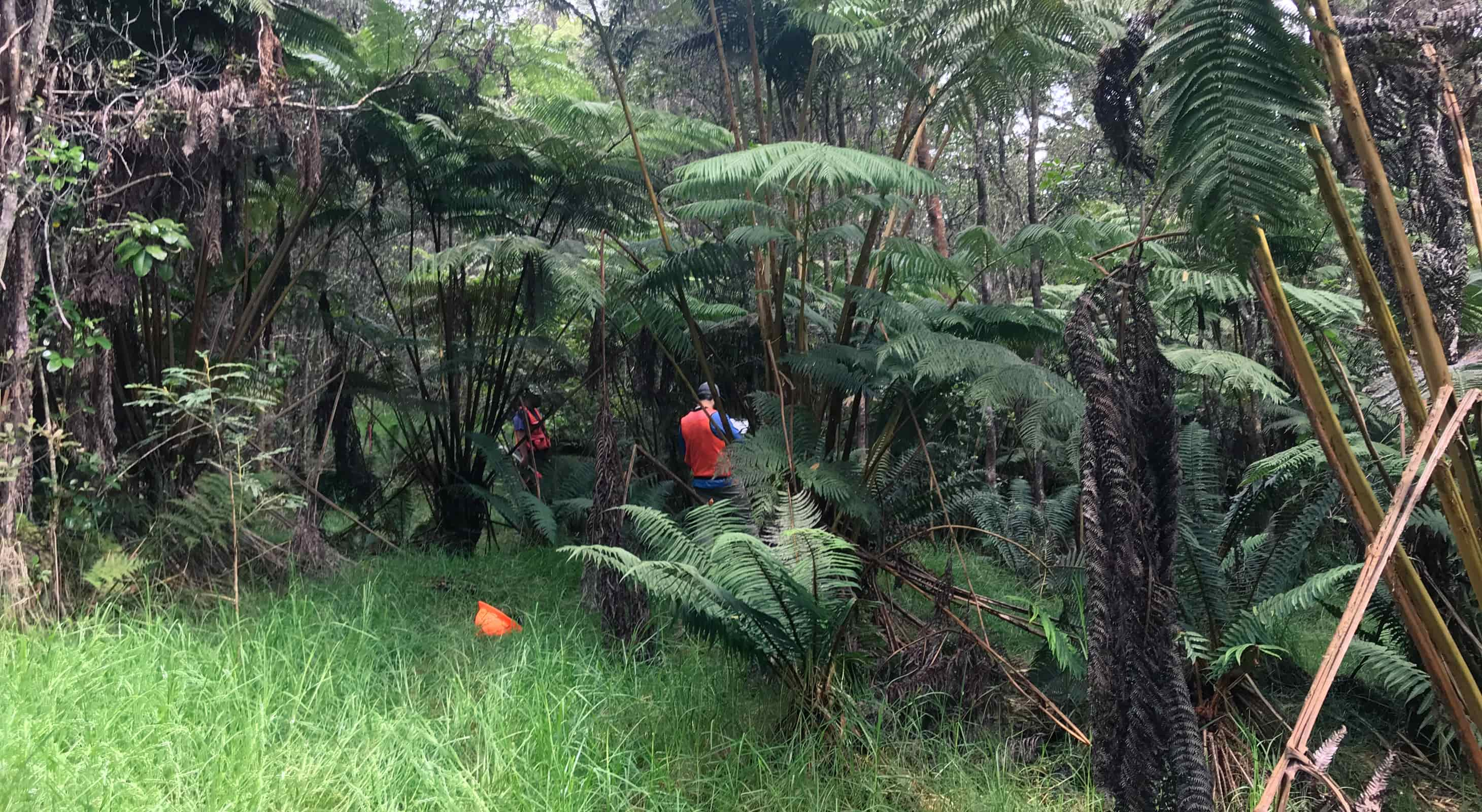 Participants observe and collect data on the ground in puʻumakaʻala