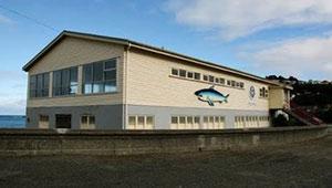 Island Bay Surf Club