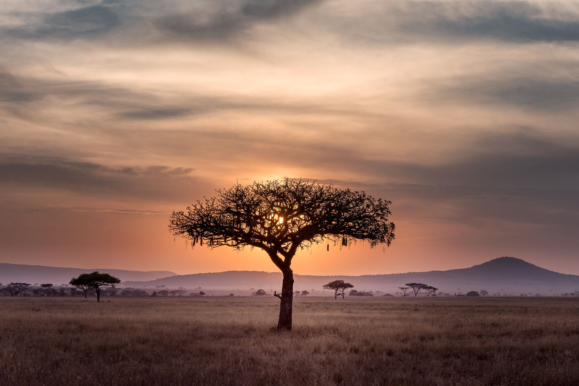 A tree in a green African land